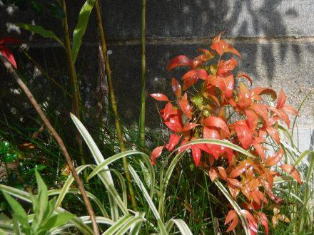 神戸市灘区・個人宅のスズメバチ駆除の事例 の処理後写真(拡大)