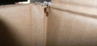 神戸市北区・マンション(個人宅)の南京虫(トコジラミ)駆除の事例の写真