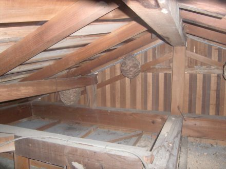 京都市左京区・個人宅のスズメバチ駆除の事例の処理前写真(拡大)