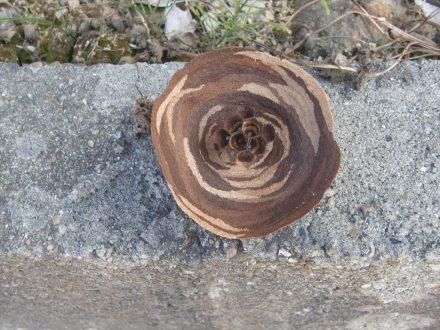 スズメバチ駆除 京田辺市 個人宅 1階軒下の処理後写真(2)