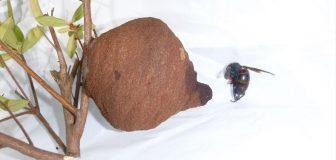 スズメバチ駆除 八尾市 個人宅 樹枝の駆除処理後