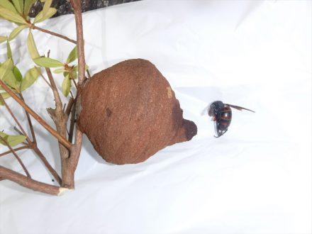 スズメバチ駆除 八尾市 個人宅 樹枝の処理後写真(拡大)