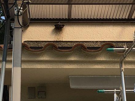 アシナガバチ駆除 京都市北区 個人宅 1階軒下の処理前写真(拡大)