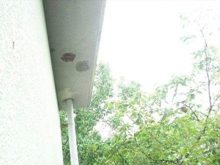 東大阪市・マンションのスズメバチ駆除の事例 の処理後写真(拡大)