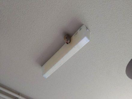 スズメバチ駆除 大阪市北区 マンション 踊場天井の処理前写真(2)