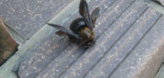 クマバチ駆除 個人宅 亀岡市 1階軒下の駆除処理後