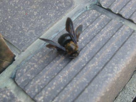 クマバチ駆除 個人宅 亀岡市 1階軒下の処理後写真(拡大)