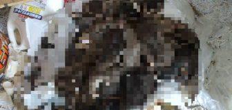 奈良市・施設のネズミ駆除の事例の駆除処理後