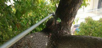 伊丹市・施設のカラスの巣の撤去・殺虫・消毒の事例 の駆除処理後