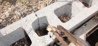 三木市・保育園のセアカゴケグモ駆除の事例の写真