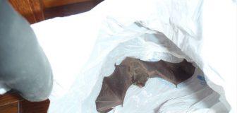 コウモリ駆除 川西市 個人宅 追い出しの写真