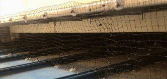 箕面市・個人宅の鳩糞清掃と防鳩ネット施工の事例の駆除処理後