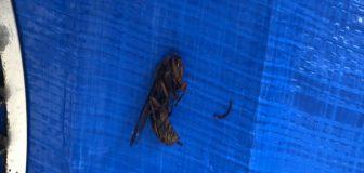 スズメバチ駆除 亀岡市 マンション 個人宅 ダクト内の駆除処理後
