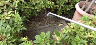箕面市・マンションのアリ駆除の事例の写真