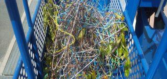 吹田市・施設のカラスの巣の撤去の事例の駆除処理後