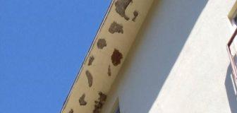 スズメバチ駆除 茨木市 マンション 5階軒下の写真