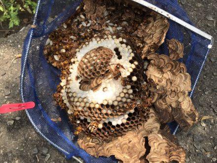 京田辺市・個人宅のスズメバチ駆除の事例 の処理後写真(2)