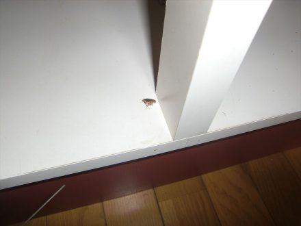 伊丹市・マンション(個人宅) のゴキブリ防除の事例の処理前写真(拡大)