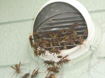 箕面市・個人宅のアシナガバチ駆除の事例の処理前写真(2)