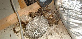 アシナガバチ駆除 箕面市 個人宅 ダクト内の写真