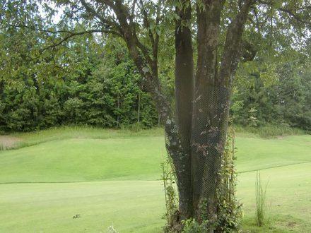 神戸市・ゴルフ場のスズメバチ駆除の事例 の処理前写真(拡大)