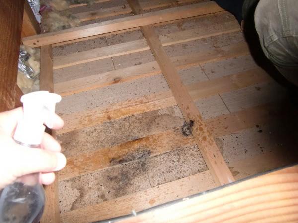 消毒除菌&穴埋め作業 松原市 個人宅 屋根裏 画像