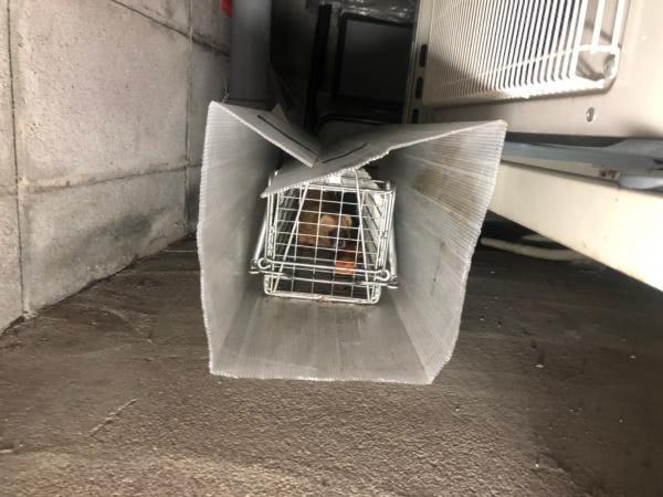 イタチ駆除 阪南市 個人宅 床下侵入口封鎖画像