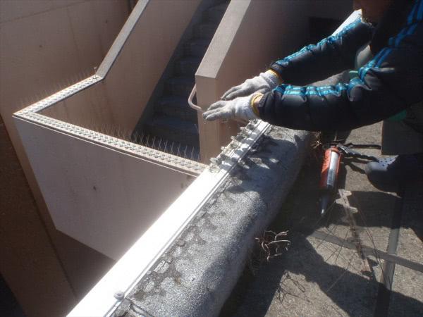 防鳩施工 神戸市西区 マンション 鳩除けスパイク設置 屋上画像
