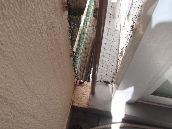 防鳩ネット補修 大阪市西区 管理会社 アパート画像