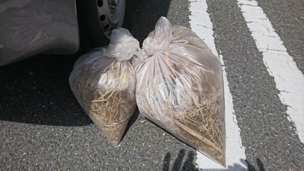 ムクドリの巣撤去&侵入口封鎖 宝塚市 事務所画像