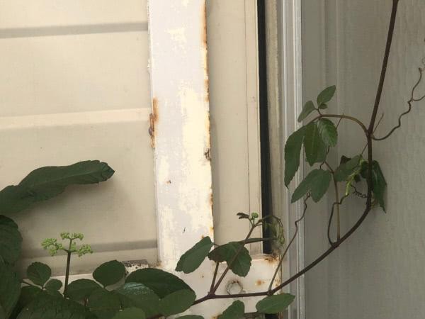 アシナガバチ駆除 交野市 個人宅 ベランダ画像