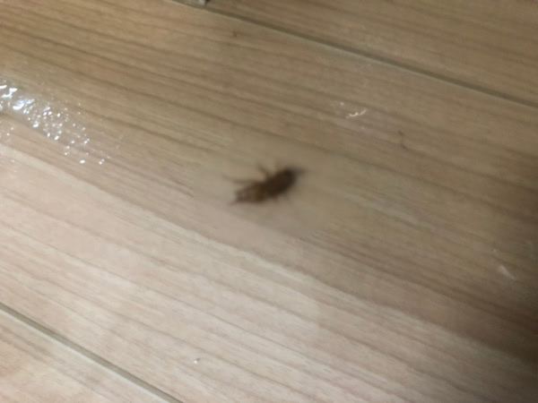 ゴキブリ駆除 宝塚市 個人宅 部屋内画像