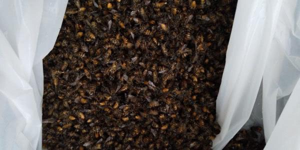 ミツバチ駆除 茨木市 個人宅 玄関先画像