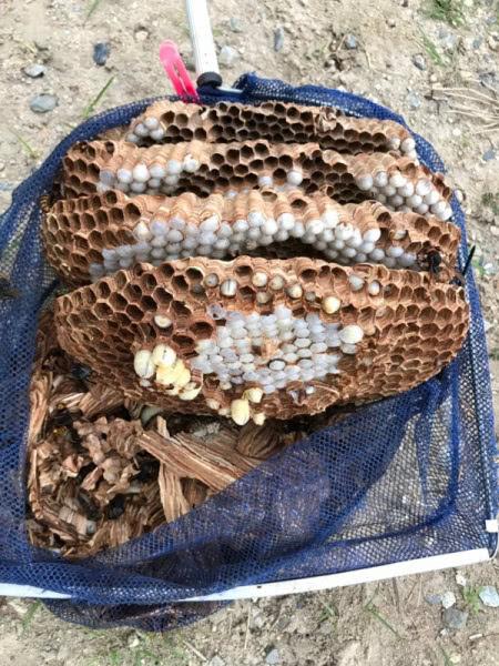 スズメバチ駆除 三田市 個人 倉庫内画像