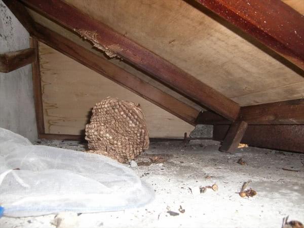 スズメバチ駆除 奈良市 屋根裏 施設画像