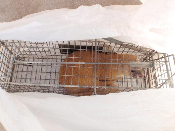 イタチ駆除 川西市 個人宅 屋根裏 画像
