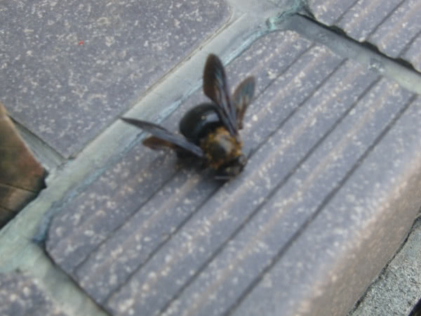 クマバチ駆除 川西市 個人宅 建物外部画像