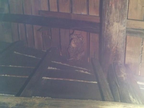 スズメバチ駆除 生駒市 旅館 倉庫天井裏画像