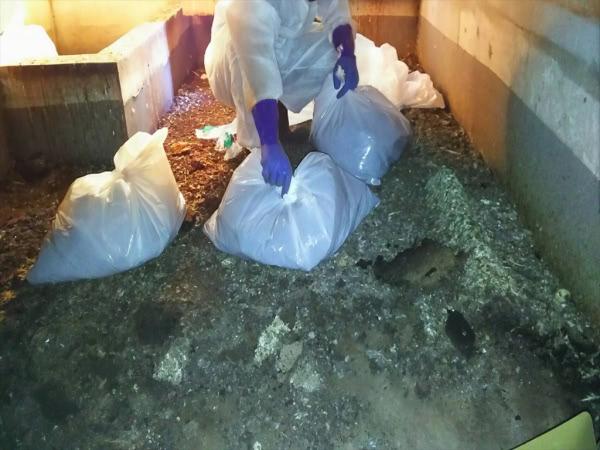 ハト糞処理 神戸市須磨区 宿泊施設 屋上機械室の中画像