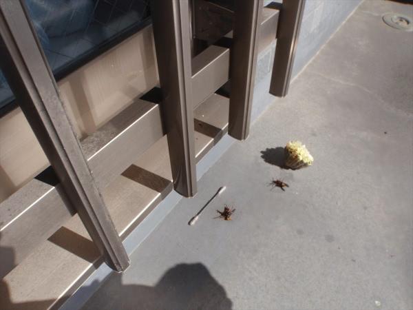 アシナガバチ駆除 伊丹市 施設 窓格子画像