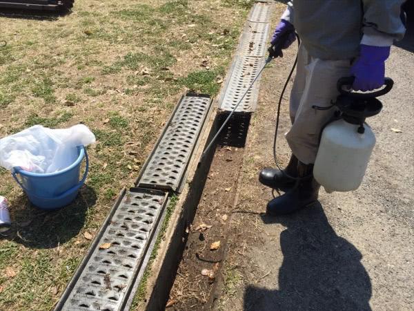 セアカゴケグモ駆除 東大阪市 施設 グレーチングの中画像