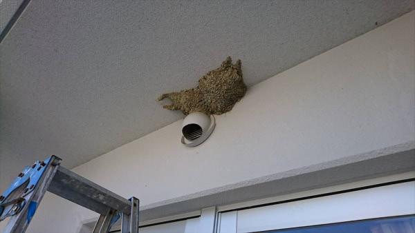 ツバメ の 巣 撤去