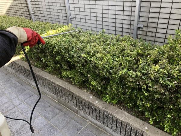 毛虫駆除 宝塚市 マンション外部植栽画像