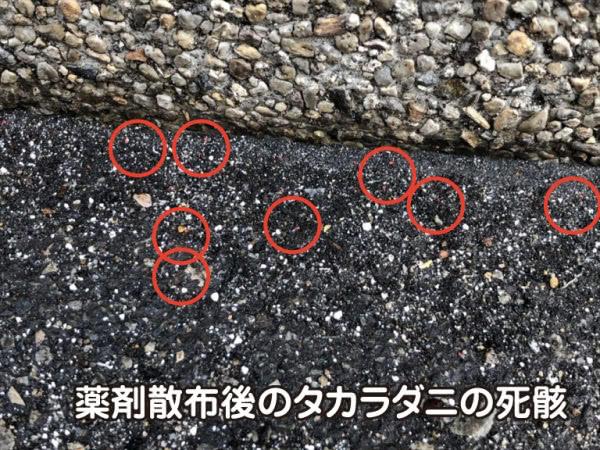 タカラダニ駆除 宝塚市 個人宅画像