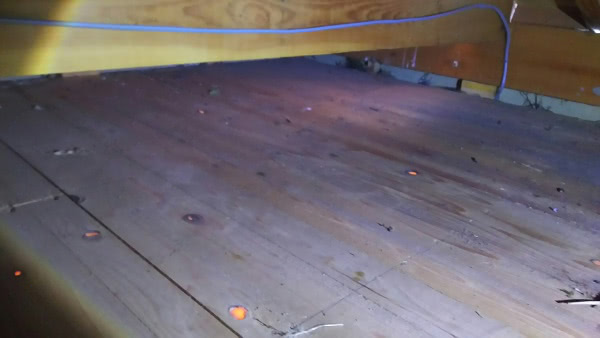 ムクドリの巣撤去 神戸市中央区 個人宅 天井裏画像