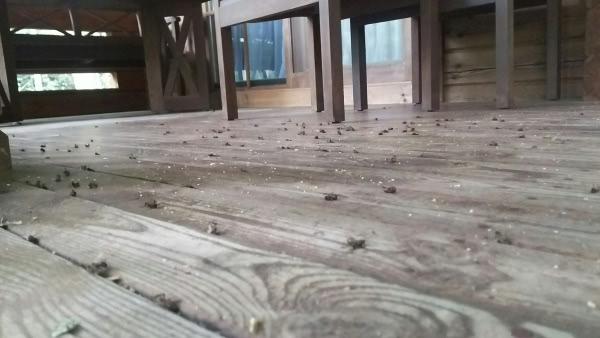 ミツバチ駆除 亀岡市 ログハウス 軒部分画像