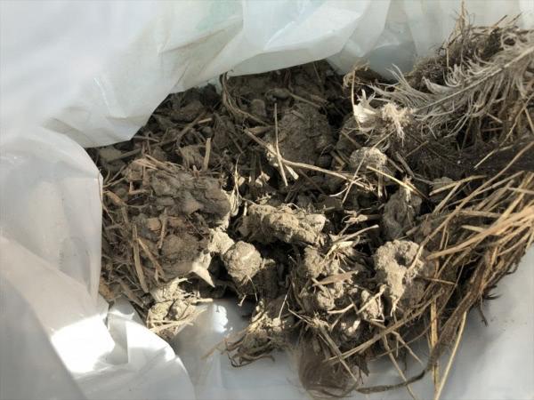 ツバメの巣撤去 八尾市 個人宅 ガレージ上画像