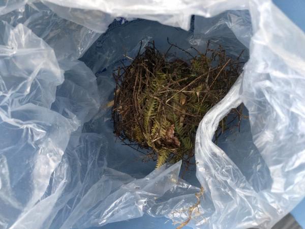 鳥の巣撤去&消毒 大阪市平野区 個人宅画像