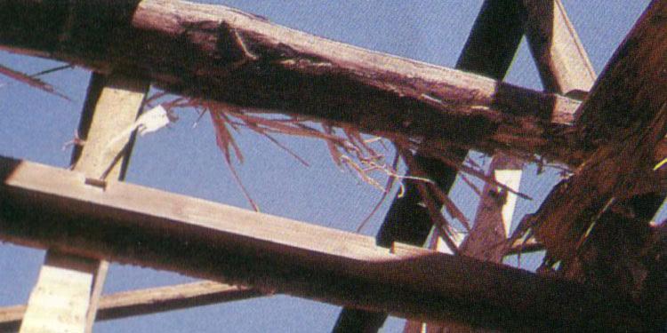 小屋根の被害