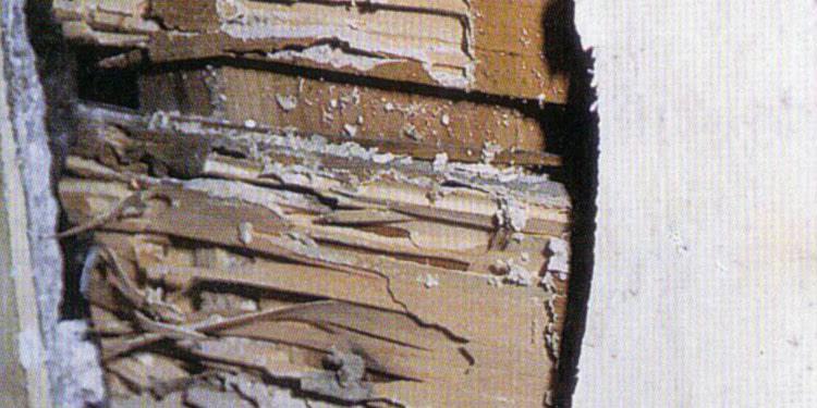 モルタル壁内部の被害